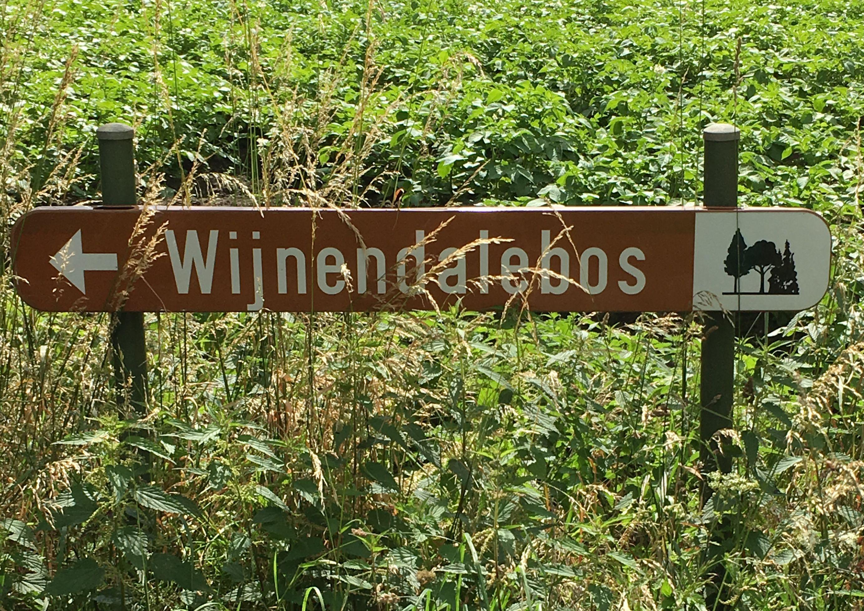 CompleetGeluk in het bos #3: Het Wijnendalebos – Torhout