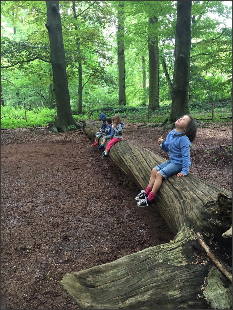 den doolhof, turnhout, picknicken