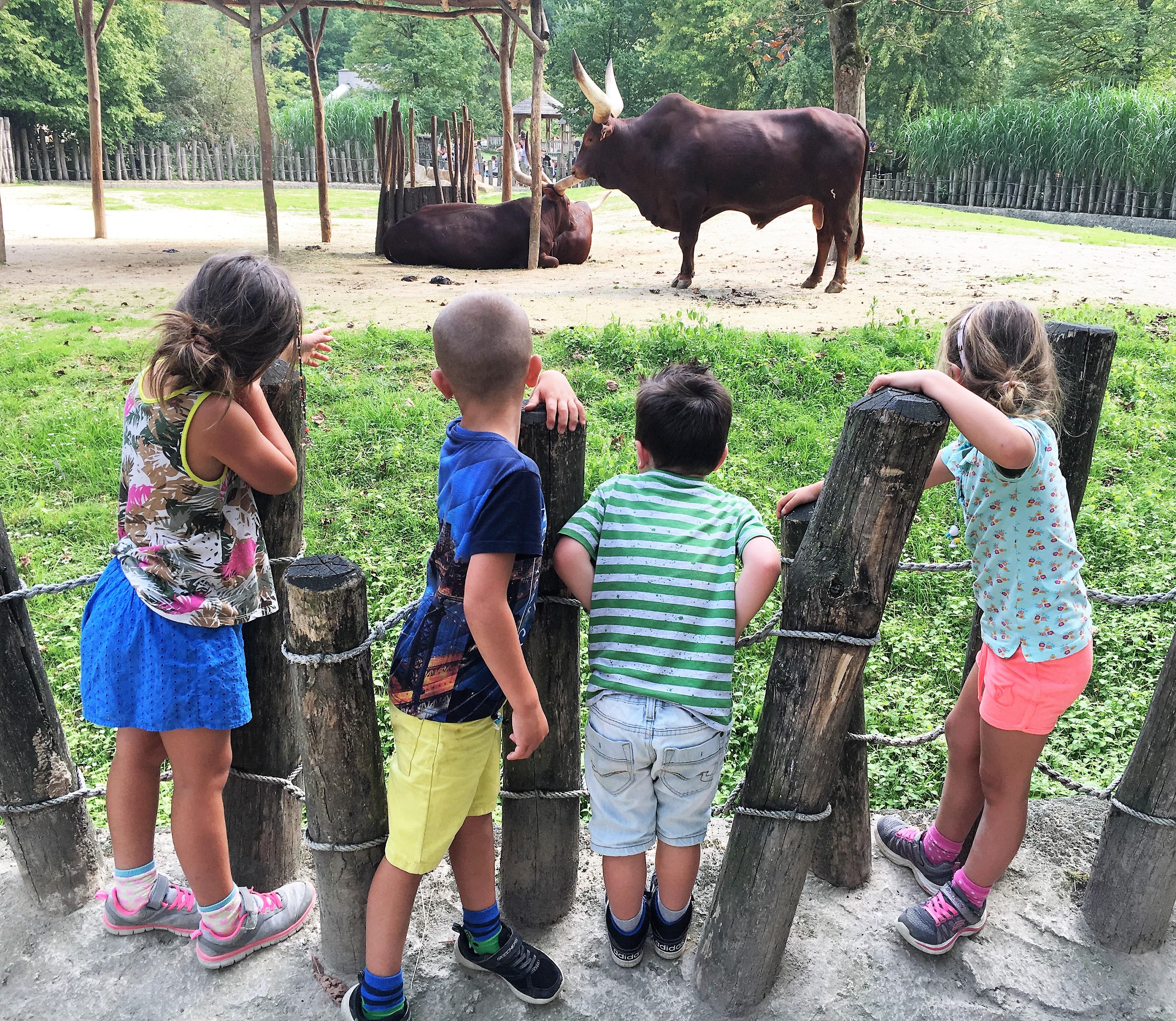 dierentuin, visitmechelen