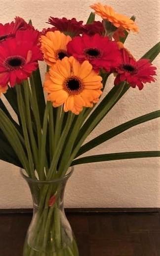 bloemen, gerbera
