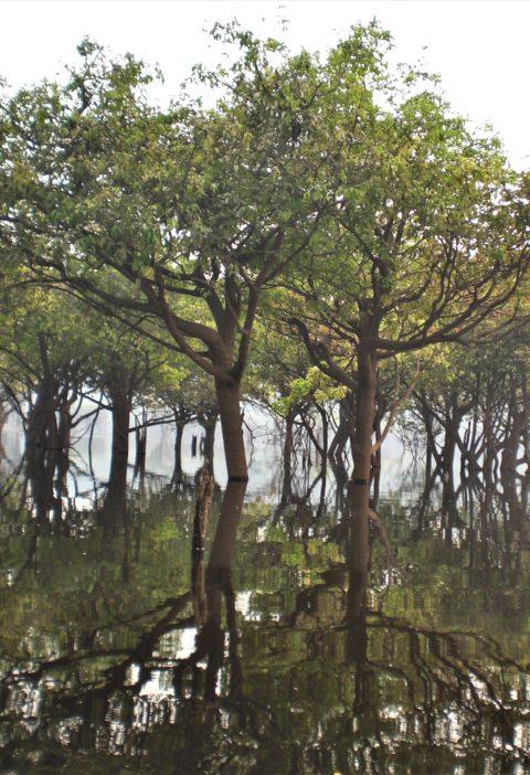 amazonas, reflectie